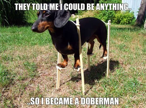 doberman,stilts