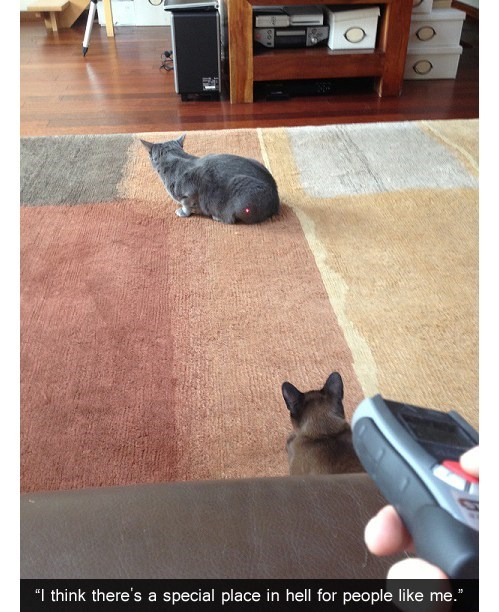 laser pointer,get it,Cats
