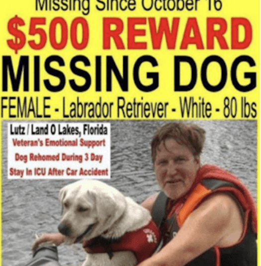 detective missing dog service dogs pet - 7198213