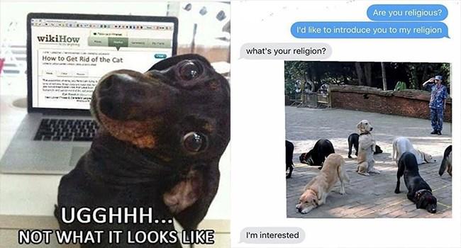 funny memes Memes doggo funny dogs doggo memes funny - 7198469