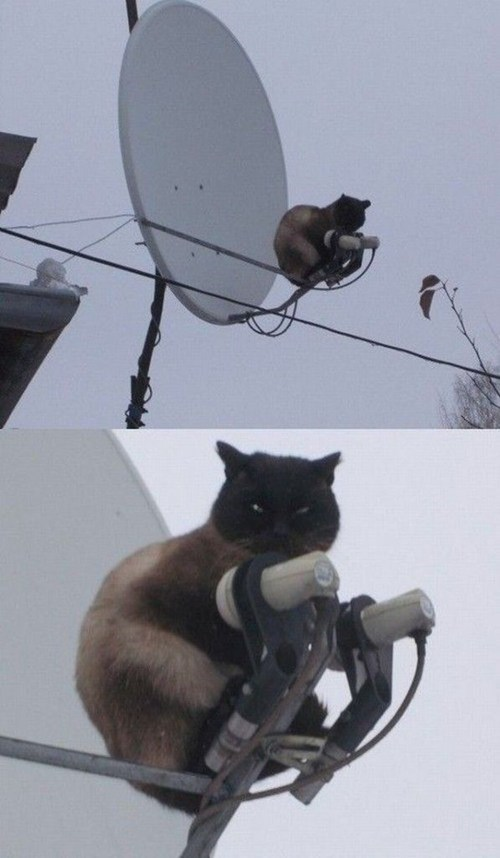 satellite,censoring,big brother,censor cat