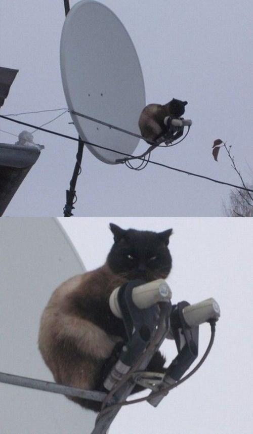 satellite censoring big brother censor cat - 7198958080