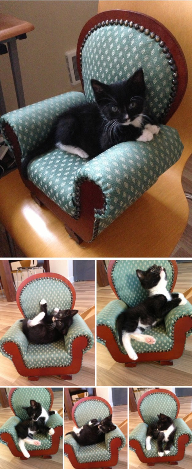 aww chairs cute sitting Cats - 7198981