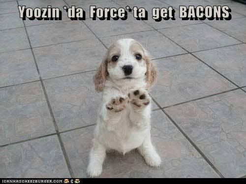 the force,puppy,bacon