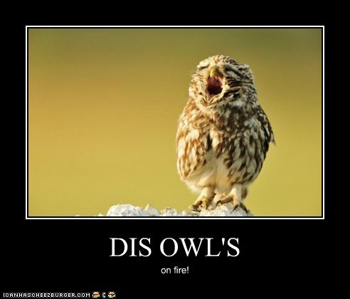 DIS OWL'S on fire!