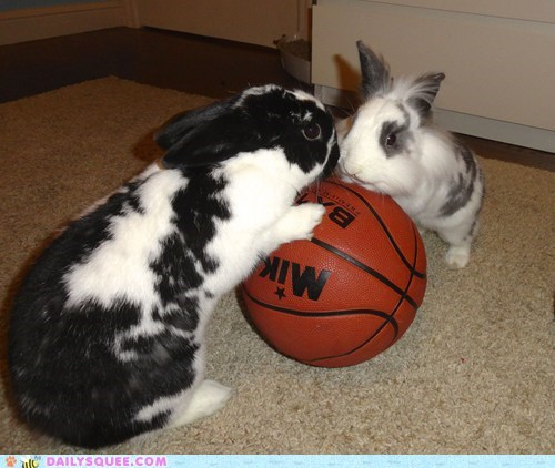 bunnies,jump,basketball