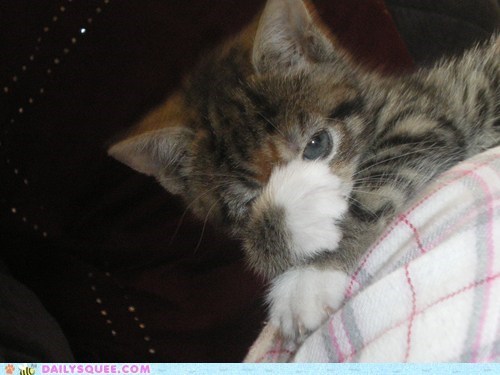sky kitty - 7206677504