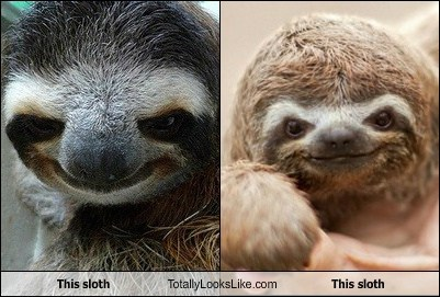 This sloth Totally Looks Like This sloth
