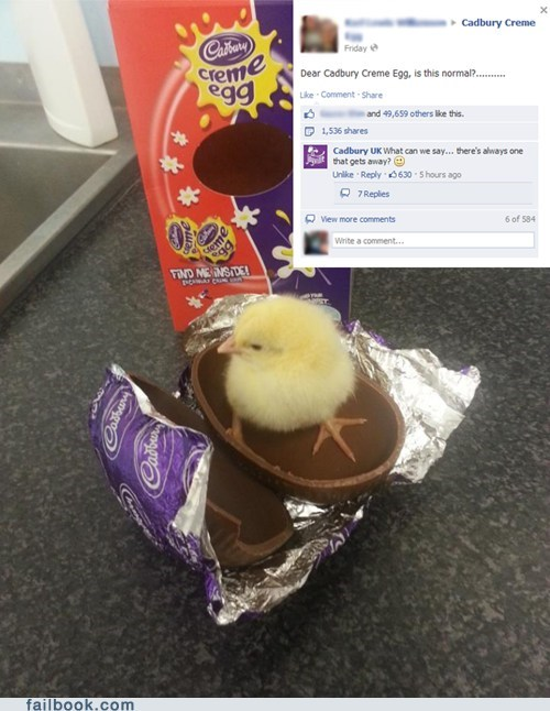 easter chicks baby chicken Cadbury chocolate failbook g rated