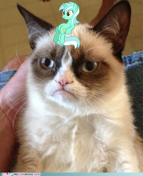 Grumpy Cat lyra Memes sitting lyra - 7209419008