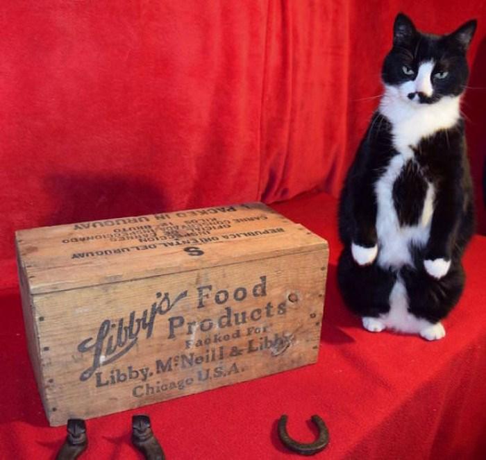 man bankruptcy Cats ebay - 7210245