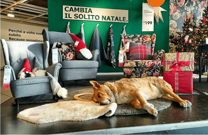 stray dogs ikea winter - 7210501