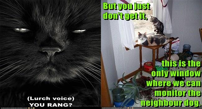 funny cat memes lolcats cat cute Memes Cats cat memes - 7210757