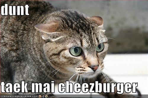 Cheezburger Image 721085696