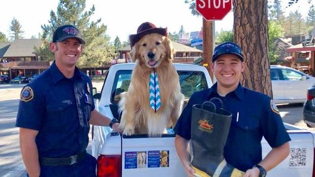 aww so cute mayor golden retriever - 7211013