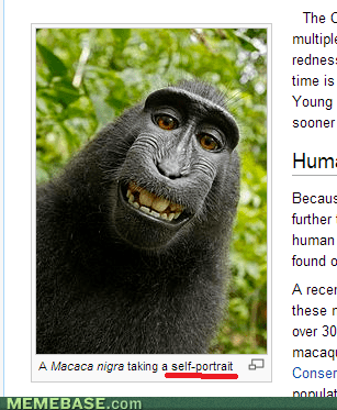 monkeys,selfie,wikipedia