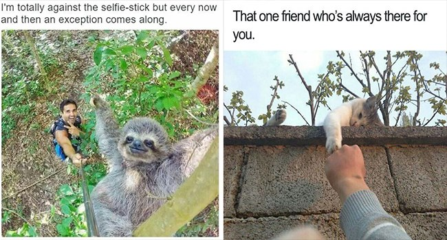 wholesome funny animals memes
