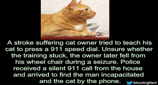 facts animal facts stories Cats - 7222021