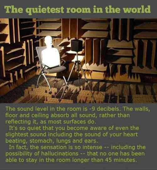 quiet room study - 7223171072