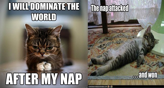 cover image of a cat napping