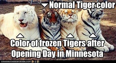 Normal Tiger color