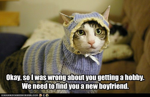 boyfriend,kitting,hobby,Cats