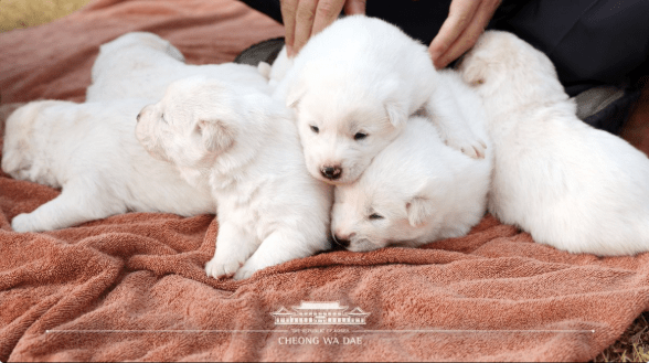 cover image of puppies