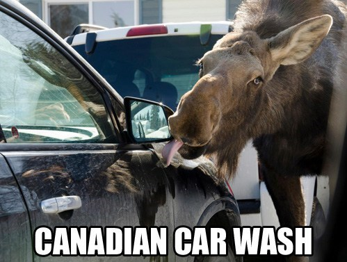 canadian,car wash,moose
