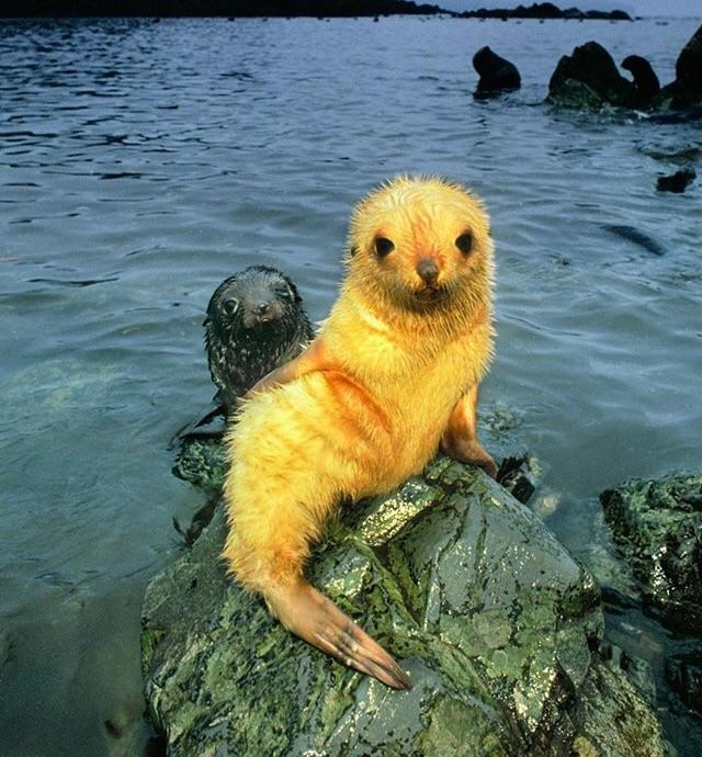 fuzzy baby seal sitting on a rock
