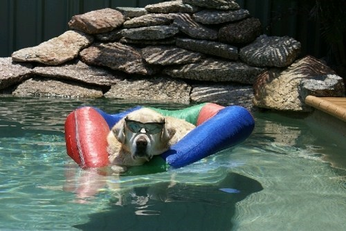shades chilling pool - 7229470720