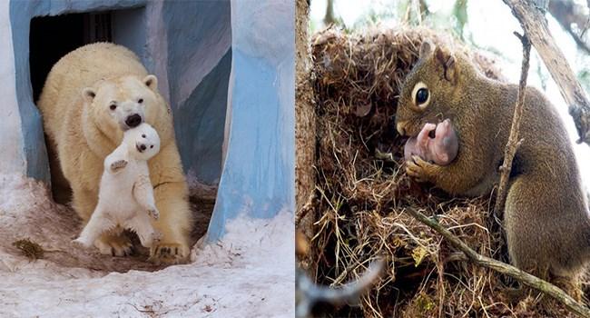 adorable animal moms