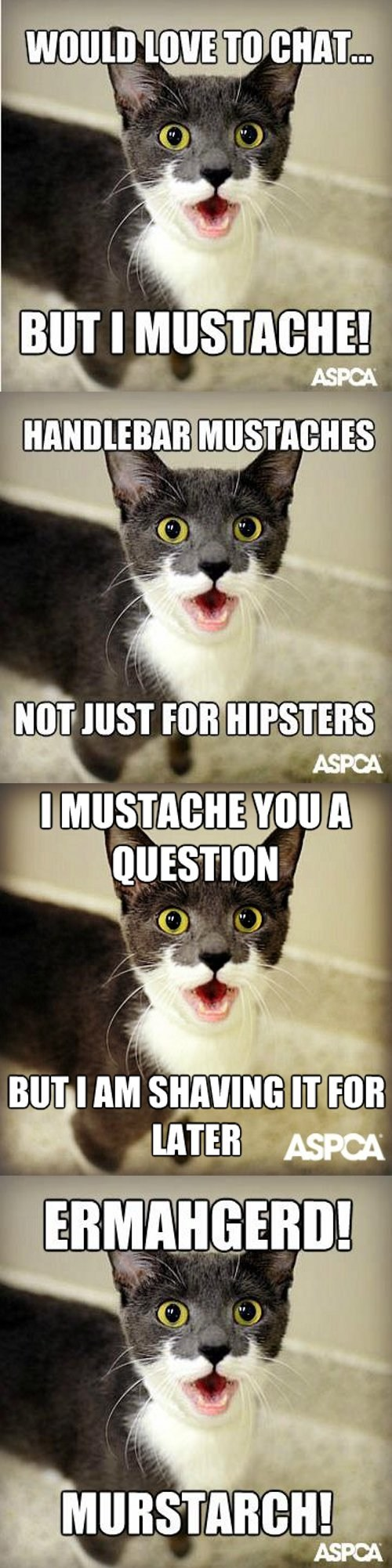 mustache meme nory Cats - 7230246912