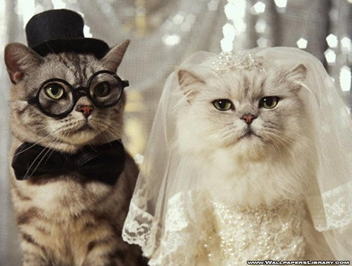 wedding dresses brides Cats