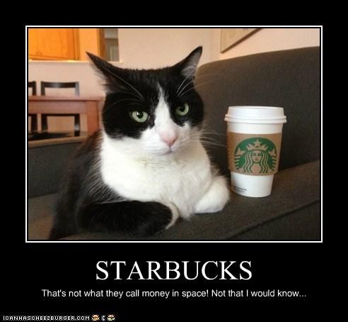 Starbucks Lolcats Lol Cat Memes Funny Cats Funny Cat