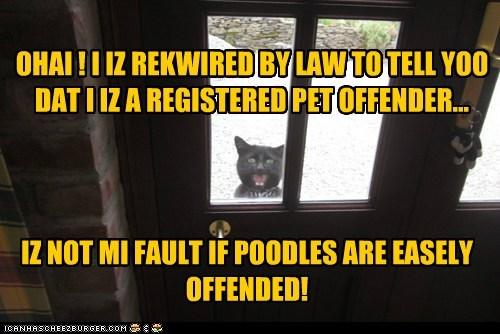 criminal Cats puns sex offender - 7233627136