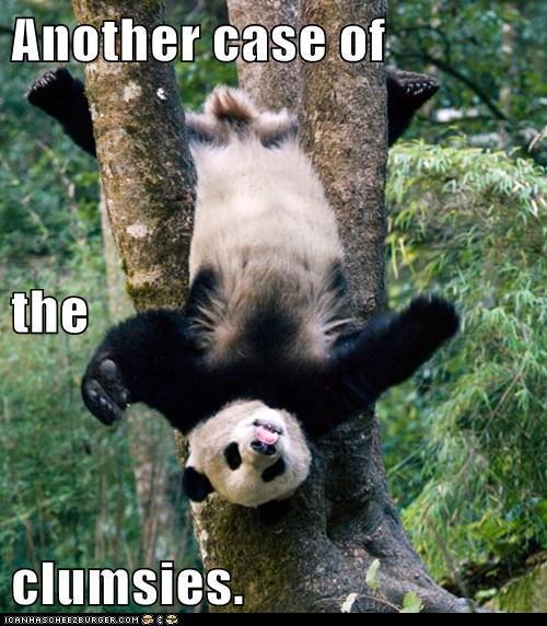panda,clumsy