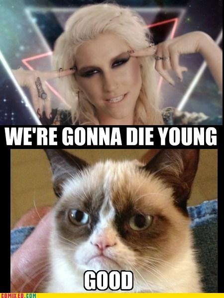 Grumpy Cat keha die young funny kesha - 7234186752