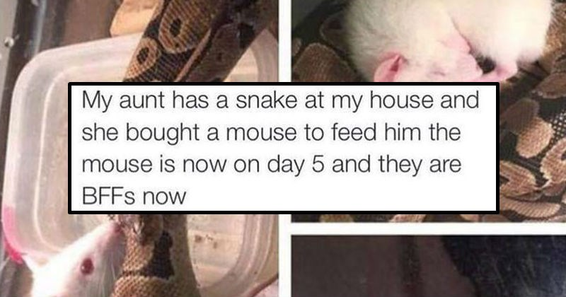 cover image of a snake and mouse who are best friends