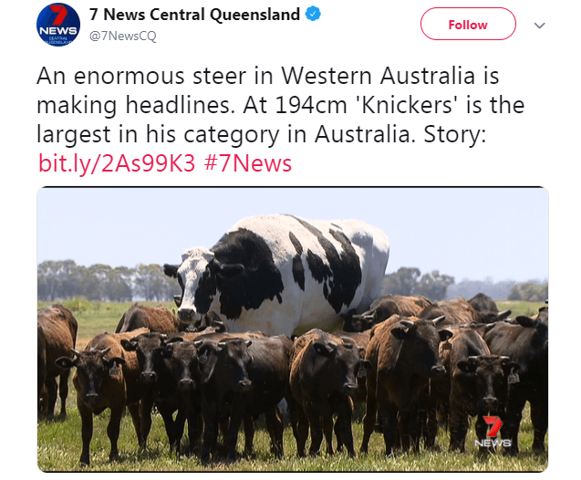 cow jokes australia giant funny tweets - 7237637