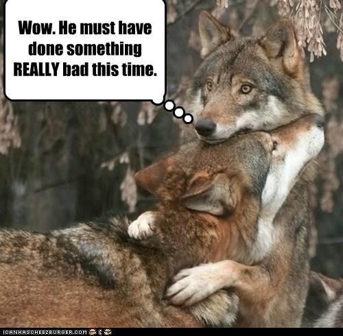 suspicious,wolf