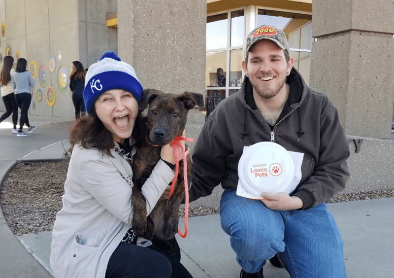 shelter adoption kansas humane society black friday adopted animal shelter beautiful - 7238917
