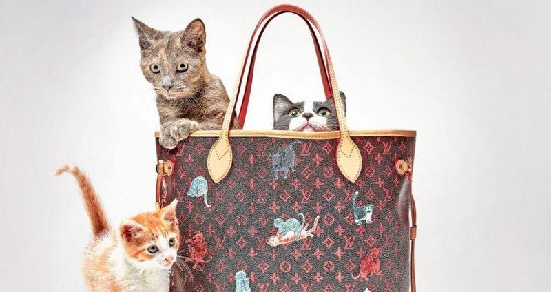 designer brand, louis vuitton cats, designer cats