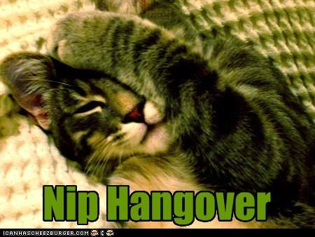 cat nip,hangover