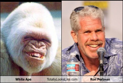 Ron Perlman totally looks like apes