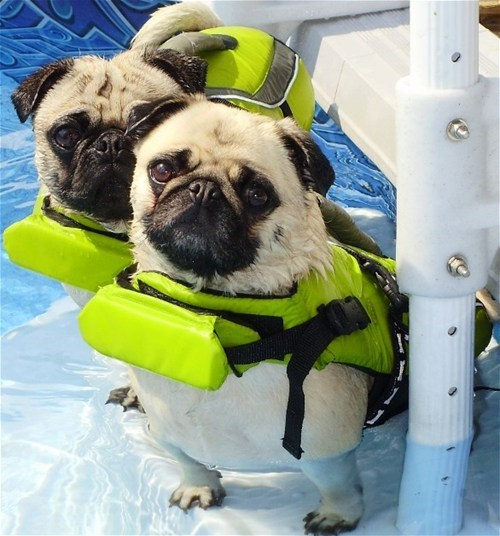 doggy paddle,swim,life jackets