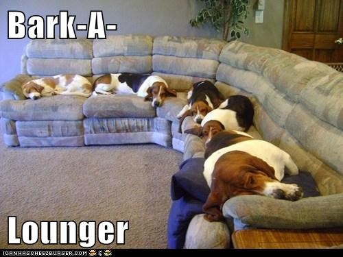 pun,lounge,bark