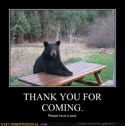 talk,table,siting,bear