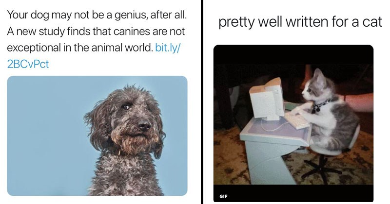 Funny tweets in response to scientific american article that states dogs aren't exceptional.