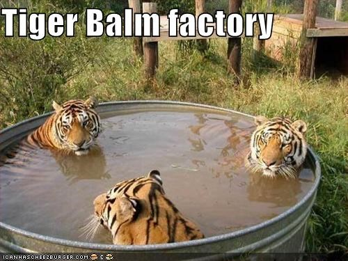 Tiger Balm Factory Cheezburger Funny Memes Funny Pictures