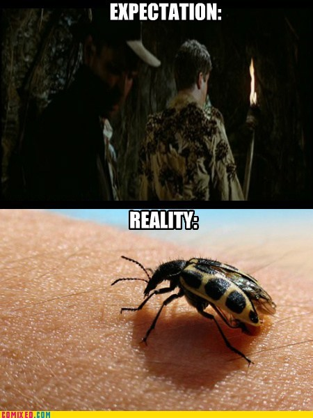 bugs,Indiana Jones,expectations vs reality